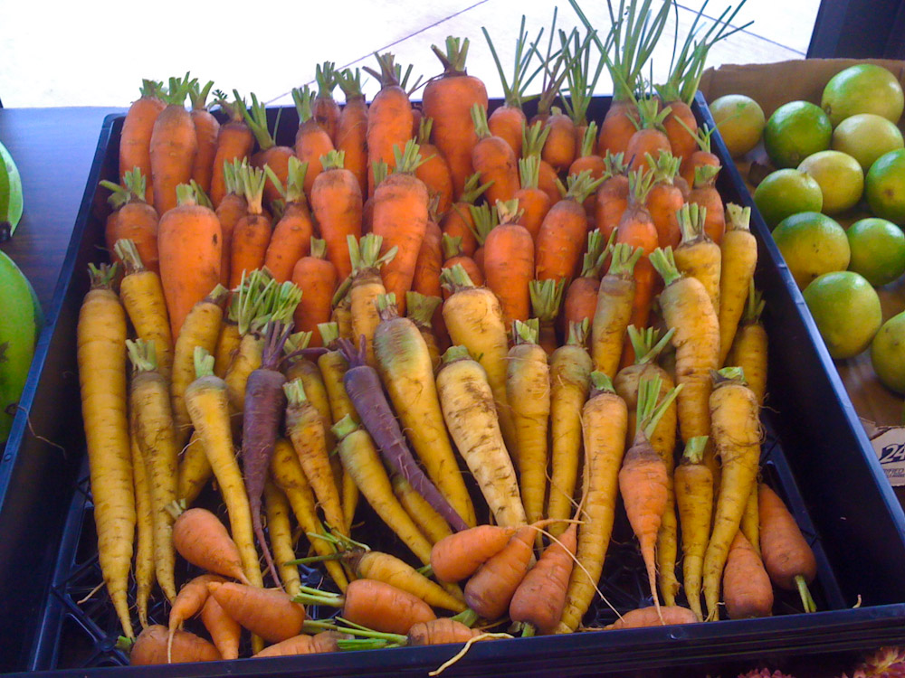 Farm Fresh Organic Carrots